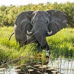 Botswana Camping Safari Canoeing Zambezi River Photo Victoria Falls