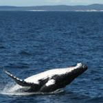 Photo Whales Cape Town Self Drive Agulhas De Hoop Garden Route
