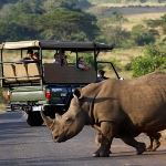 Zimbabwe Safari Holiday Hwange Game Reserve Victoria Falls