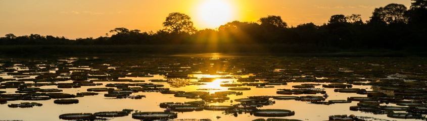 Pantanal Holidays - Holidays to the Pantanal Wetlands