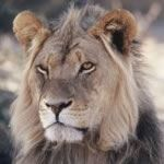 Escorted Tour South Africa Kruger National Park Durban Cape Town