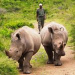 Disabled Safari Durban South Africa KwaZulu Natal Wildlife