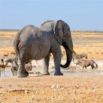 Namibia Escorted Tours Safari Etosha Namib Desert Tour