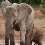 Swaziland Mozambique South Africa Self Drive Vacation Kruger Park