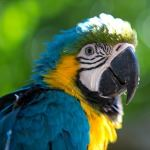 Photo Ecuador Galapagos Amazon Cloud Forests Peru Bird Watching Cruise