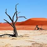 Namibia Flying Safari Holiday Vacation Etosha Namib Desert