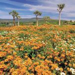 Photo Wildflowers South Africa Wheelchair Safari Kalahari Cape Town
