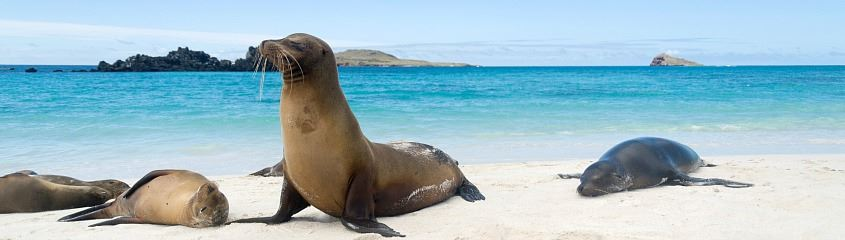 Galapagos sea lion on Espanola - Galapagos cruises are the best way to see lots of wildlife