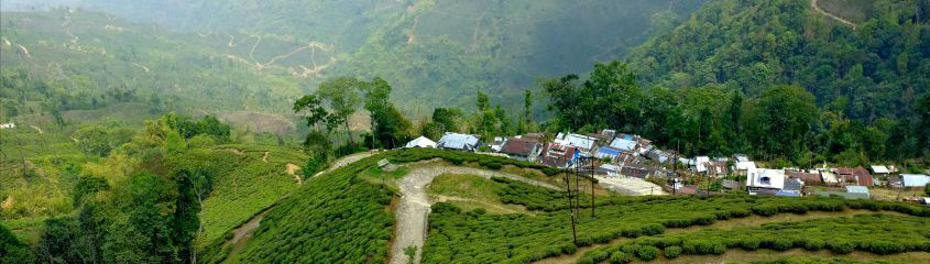 Holidays to West Bengal, Sikkim & Assam - see Darjeeling tea plantations, Kaziringa National Park and more
