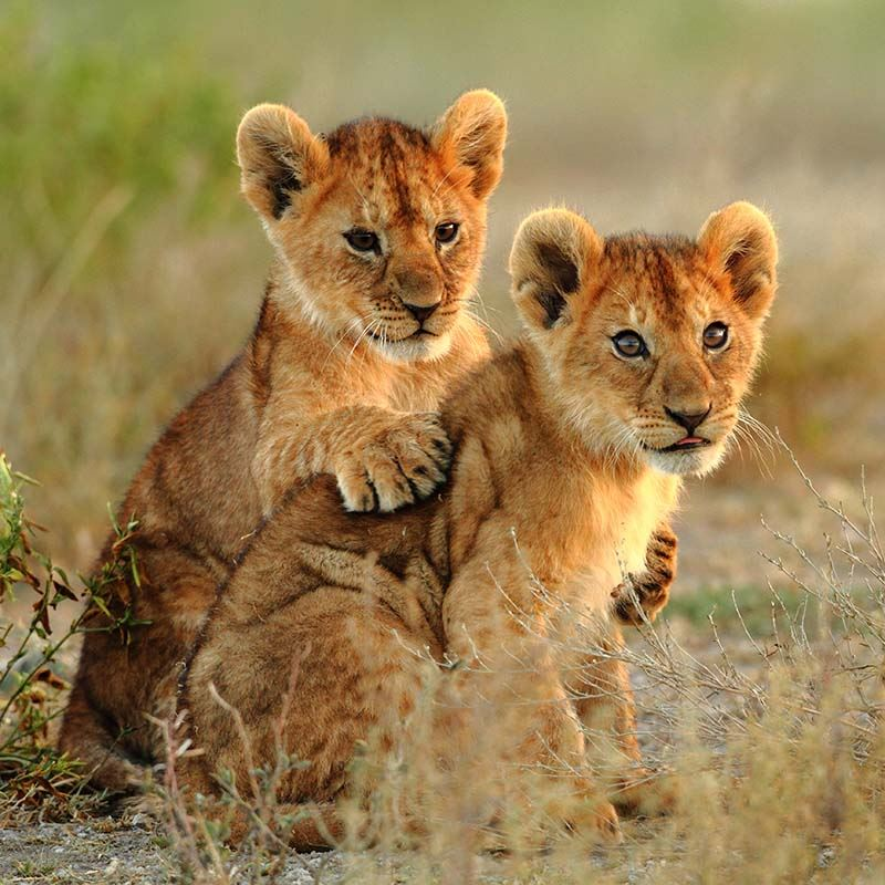 Luxury Safari in South Africa with  Panorama Route