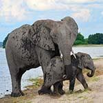 Victoria Falls Cape Town Botswana Safari Holiday Honeymoon