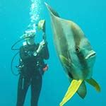 Mozambique Diving Safari Holiday Inhambane Tofo Beach Kruger