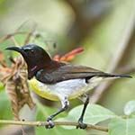 Photo Bird Watching Sri Lanka Birding Yala Bundala Sinharaja Rainforest