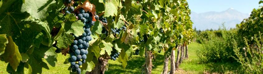 Food and wine holidays - Argentina vineyard, Mendoza