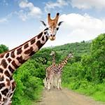 Safari Vacation South Africa Cape Town Franschhoek Kruger Park